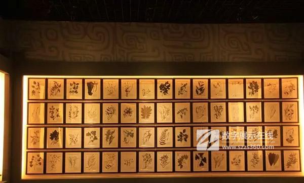 【中药标本展示墙,囊括大量标本,是中药学习圣地】